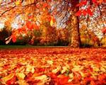fulles d'autumne